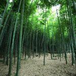 近所の絶景探し:茅ヶ崎