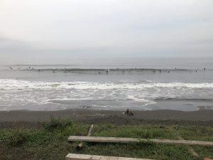 小蝿が漂う台風5号ダナスの汚波